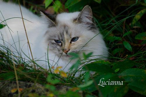 Hinter dem Regenbogen Lucianna von der weißen Fee